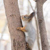 На дереве :: Alex Bush