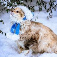 Первый снег. Лиза на прогулке :: Нина