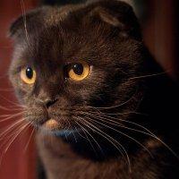 Мой ласковый и нежный зверь :: Игорь Николаич