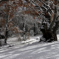 Буковый лес :: Лара Лаби