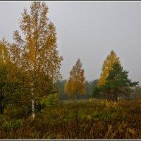 Туманная осень в перелесках :: Александр Березуцкий (nevant60)