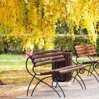 Осень :: Илья