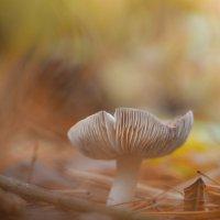 Дары леса :: Андрей Степанов