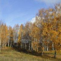 Золотое и голубое. :: Андрей Вычегодский