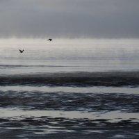 Сегодня у Белого моря (5) :: Владимир Шибинский