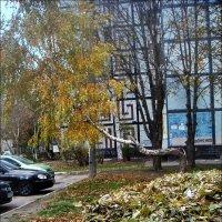 Осенний этюд с кривой берёзой :: Нина Корешкова