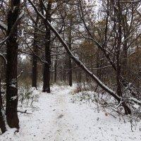 Осенняя зима. Будет ли зимняя? :: Андрей Лукьянов
