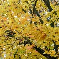 Осень... :: Владимир Холодницкий