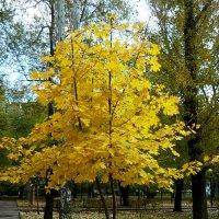 "Осень. На ""подиуме"" :: Надежда"