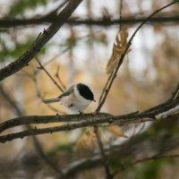 Птичка на ветке :: Андрей Климов