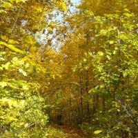Золотая осень :: наталия