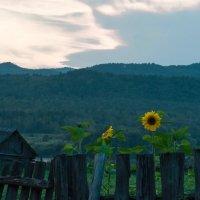 Забытая деревня :: Валентина Камбурова