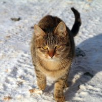Выхожу один я на дорогу.. :: Андрей Заломленков