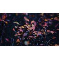 Буйство красок :: Ли Лесная