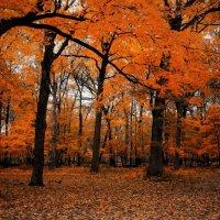 Осенние этюды-3 :: Gene Brumer