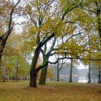 Осень в пасмурный день 5 :: Виталий