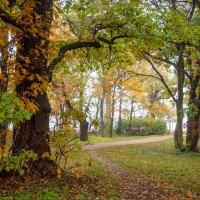 Осень в пасмурный день 3 :: Виталий