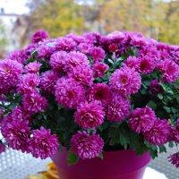 """""""...Из цветов прекрасных и осенних Нарисую солнечный букет..."""" :: Galina Dzubina"""