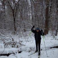 Лыжный бег с препятствиями :: Андрей Лукьянов