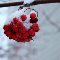 Первый снег :: Анна Шишалова