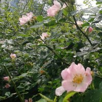 После дождя :: наталия