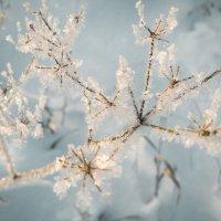 Морозно :: Artem72 Ilin