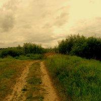 Дорожка к Оке :: Андрей Головкин