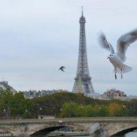 Paris :: Masha Tomas