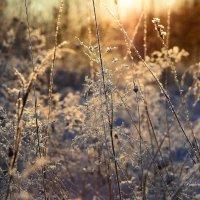 Золотой зимний вечер!!! :: סּﮗRuslan HAIBIKE Sevastyanovסּﮗסּ