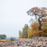 Осень в пасмурный день 9 :: Виталий