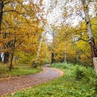 Осень в пасмурный день 6 :: Виталий