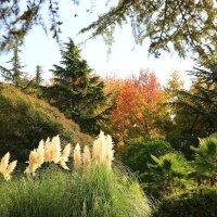 Осень возле нашего дома :: valeriy khlopunov