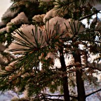 елочка в снегу :: Валерия Воронова
