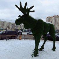 Городской лось (очень мирный) :: Андрей Лукьянов