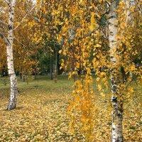 Золото осени :: Alexander Varykhanov