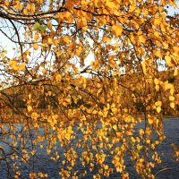 Прощанье с осенью :: Антонина