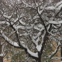 Осенний снег :: Вера Моисеева