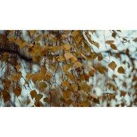 Осень :: Ли Лесная