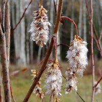 Осенние цветы :: Елена Якушина