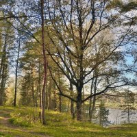 Пейзаж с дубом :: Владимир Дементьев
