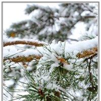 Первый снег. :: Paparazzi