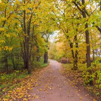 Осень в пасмурный день 12 :: Виталий