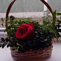 корзинка счастья-2 :: Роза Бара