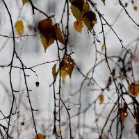 Осени  занавесь за моим  окном.... :: Валерия  Полещикова