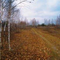 Ноябрь :: Виктория Власова