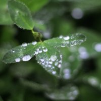 После дождя :: Татьяна Тимофеева