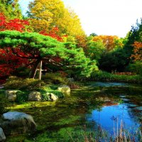Одарила осень щедро красками... :: Nina Yudicheva