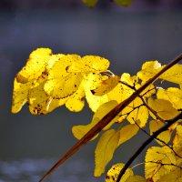 Золотая ветка :: Nina Streapan