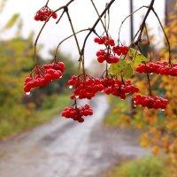 Осень  плачет :: Наталья Казанцева