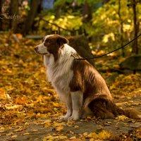 animal :: Екатерина Кудым